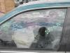 car265.jpg